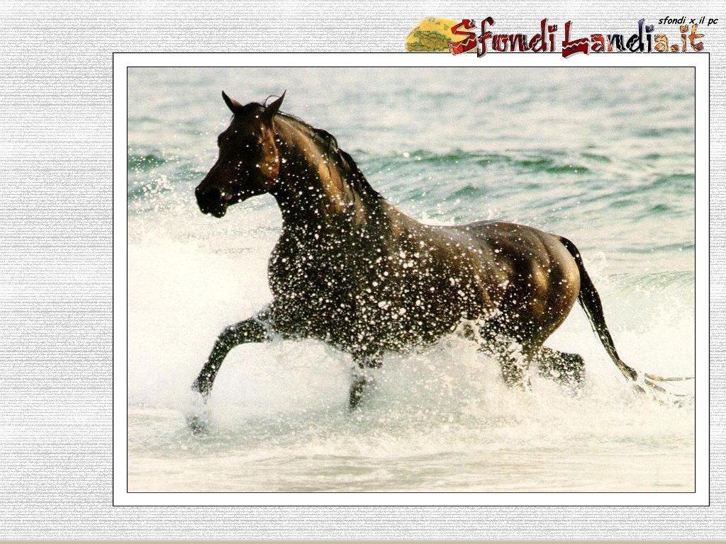 Sfondi per il desktop sfondi animali gratis sfondi for Sfondi cavalli gratis